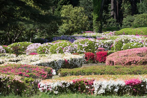 神代植物公園【つづじ園】05