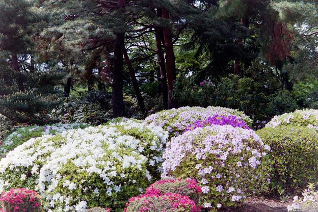 神代植物公園【つづじ園】07銀塩