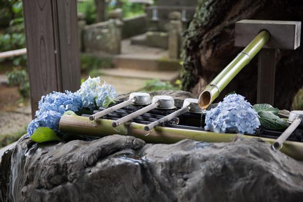 妙楽寺【手水舎の飾り付け】