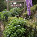 薬師池公園【えびね苑】