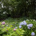 薬師池公園【えびね苑の眺め】1