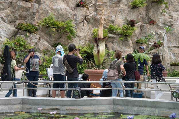 神代植物公園【ショクダイオオコンニャク】1