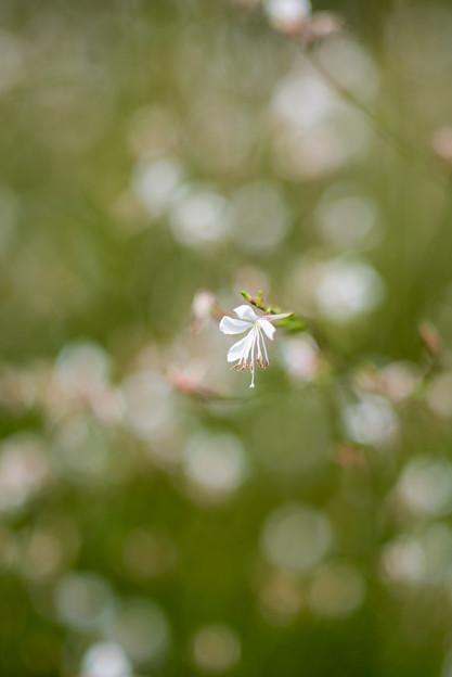 花菜ガーデン【白い花:名称不明】
