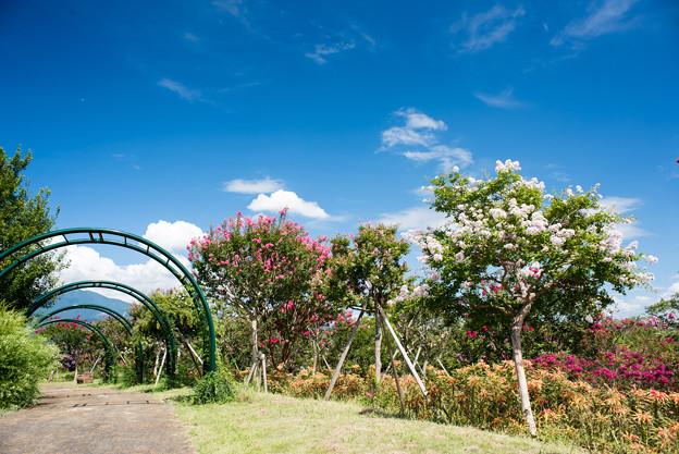 花菜ガーデン【9月の景色】3