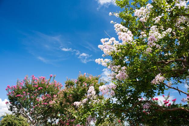 花菜ガーデン【9月の景色】4