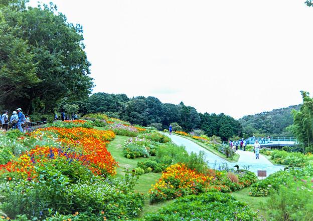里山ガーデン【大花壇の眺め】1銀塩
