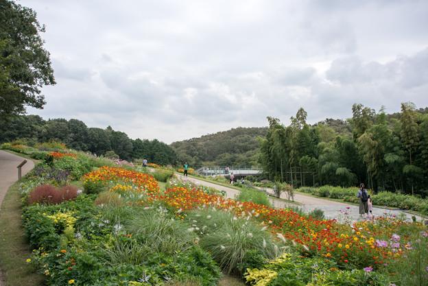 里山ガーデン【大花壇の眺め】2