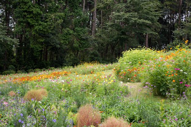 里山ガーデン【大花壇の眺め】4