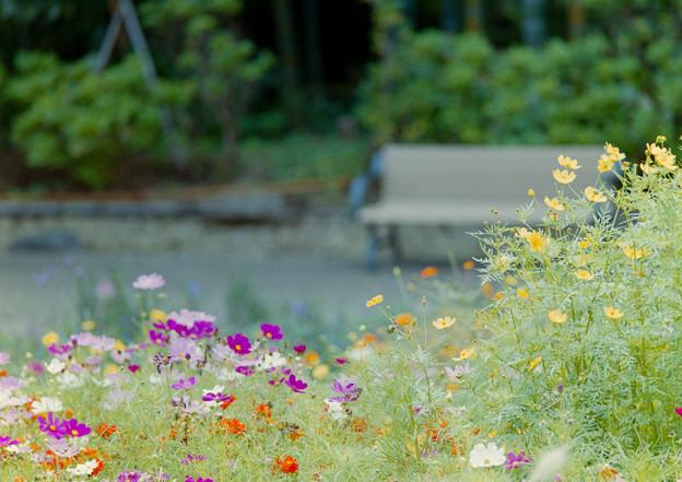 里山ガーデン【大花壇の眺め】5銀塩