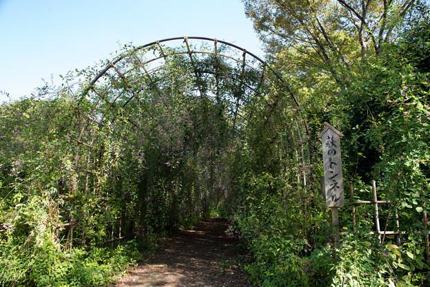 府中市郷土の森【萩のトンネル】1