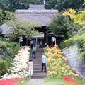 Photos: 西方寺【参道沿いのヒガンバナ】2