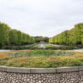 昭和記念公園【10月のカナール】