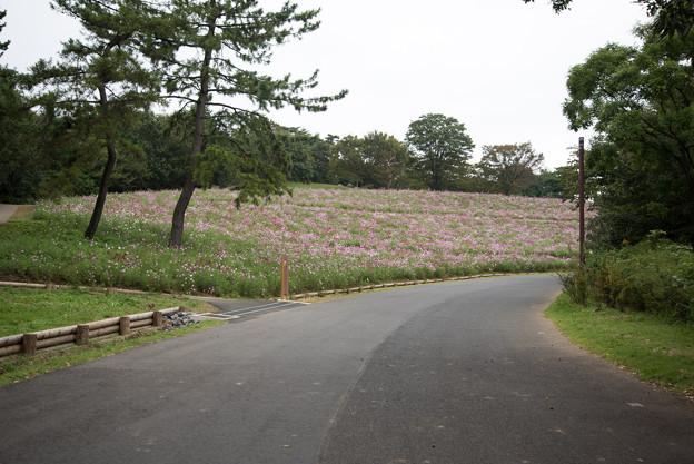 昭和記念公園【花の丘の眺め】1