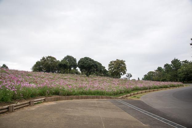 昭和記念公園【花の丘の眺め】2