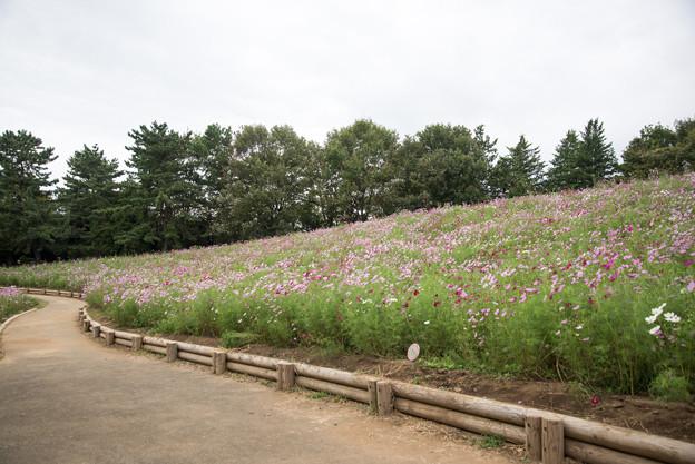 昭和記念公園【花の丘の眺め】3