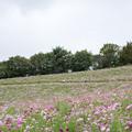 昭和記念公園【花の丘の眺め】6