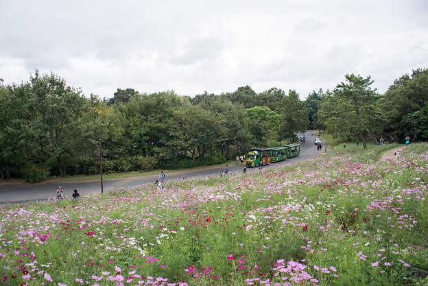 昭和記念公園【花の丘の眺め】7