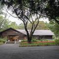 昭和記念公園【こもれびの家付近:ヒガンバナ】1