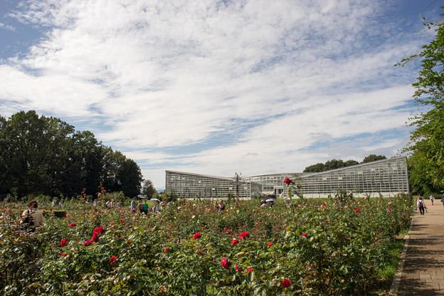 神代植物公園【バラ園の眺め】