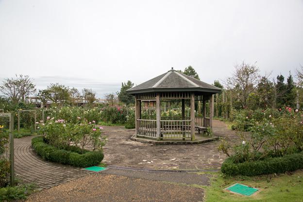 花菜ガーデン【バラ園の全景】4