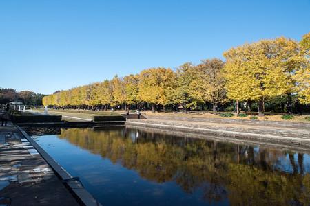 昭和記念公園【カナールの黄葉】3