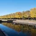 Photos: 昭和記念公園【カナールの黄葉】3