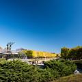 昭和記念公園【カナールの黄葉】5