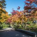 Photos: 昭和記念公園【日本庭園:紅葉】1-1