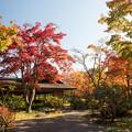 Photos: 昭和記念公園【日本庭園:紅葉】1-2