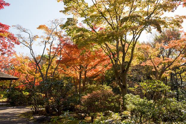 Photos: 昭和記念公園【日本庭園:紅葉】1-3