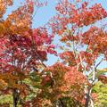Photos: 昭和記念公園【日本庭園:紅葉】1-4