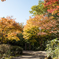 Photos: 昭和記念公園【日本庭園:紅葉】1-5