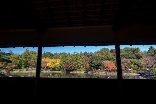 昭和記念公園【日本庭園:紅葉】2-1