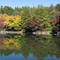 昭和記念公園【日本庭園:紅葉】2-2