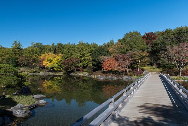 昭和記念公園【日本庭園:紅葉】2-3