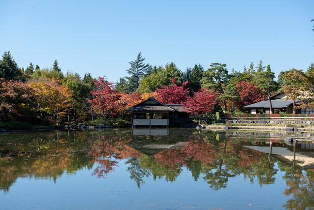 18昭念公園【日本庭園:紅葉】2-4