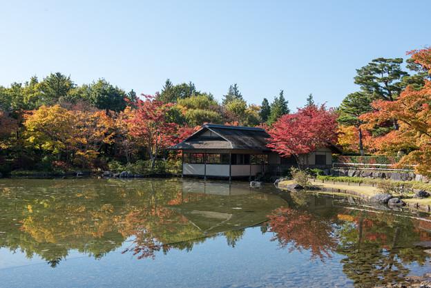 昭和記念公園【日本庭園:紅葉】2-5