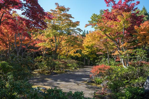 昭和記念公園【日本庭園:紅葉】3-1
