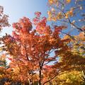 昭和記念公園【日本庭園:紅葉】3-2