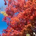 昭和記念公園【日本庭園:紅葉】3-3