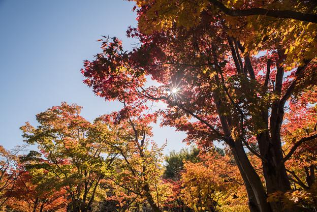 昭和記念公園【日本庭園:紅葉】3-4