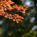 Photos: 昭和記念公園【日本庭園:紅葉】3-6