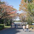 昭和記念公園【水鳥の池方面の景色】1