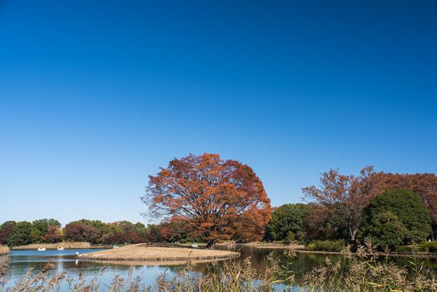 昭和記念公園【水鳥の池方面の景色】2