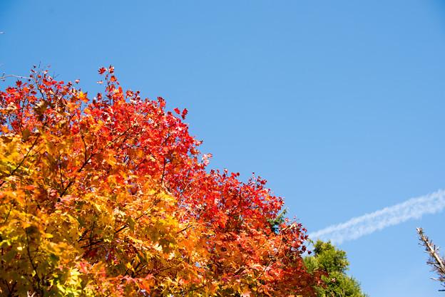 河口湖【紅葉が見頃です】