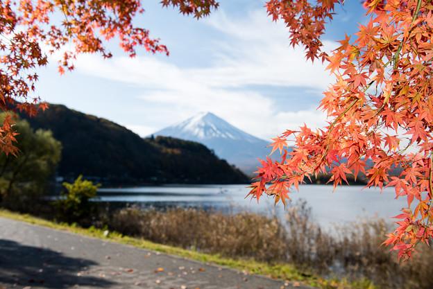 河口湖【富士山と紅葉】5