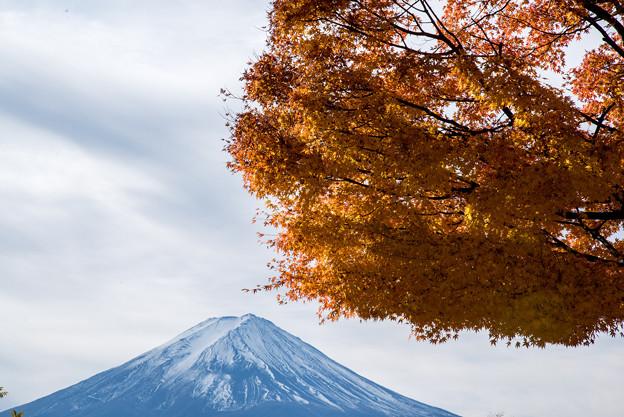 河口湖【富士山と紅葉】6