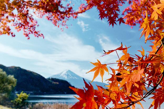 河口湖【富士山と紅葉】8銀塩