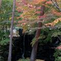 河口湖【久保田一竹美術館の紅葉】1