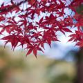 河口湖【久保田一竹美術館の紅葉】2